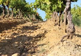 Comment restaurer des sols dégradés?
